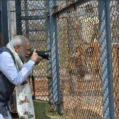 'Modi shooting an unarmed tiger': Prime minister's photography skills feed Twitter humour
