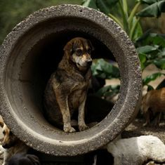 Karnataka: 150 stray dogs allegedly poisoned to death, police file FIR against gram panchayat