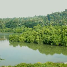 Kerala is finally realising the need to preserve its mangroves