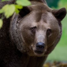 Russia: Men who crushed a bear to death face criminal inquiry