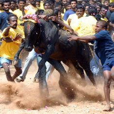 Centre will take a stand on jallikattu only after SC's final verdict, says environment minister