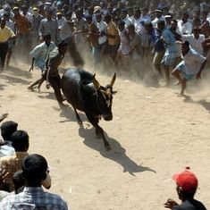 Jallikattu supporters detained across Tamil Nadu for attempting to organise the banned sport
