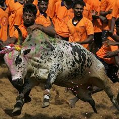 Chennai to host a Jallikattu Premier League on January 7