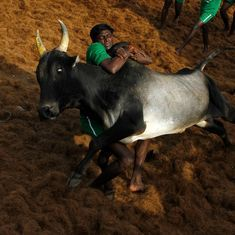 SC refuses to stay order on jallikattu law, slams Tamil Nadu for failed law-and-order situation