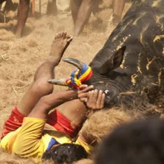 Madurai: 36 people injured in jallikattu event organised at Avaniapuram