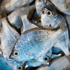Warmer seas may shrink fish by 30%, shows new study on climate change