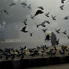 A 'Pakistani spy pigeon' that was in police custody has escaped after a constable lifted its cage