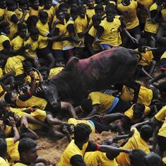 Jallikattu in Tamil Nadu: Teen dies while watching bull-taming sport in Madurai