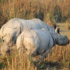 What the controversy over BBC documentary on Kaziranga reminds us about models of conservation