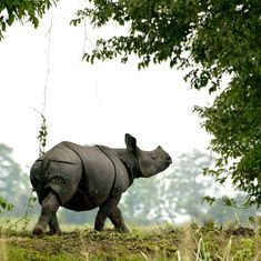 Banning the BBC for its Kaziranga story is a dangerous act of muzzling the media