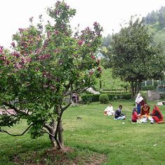 The Kashmir garden that made Shah Jehan green with envy (and other tales of spring in the Valley)