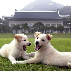South Korea: Ousted President Park Geun-hye leaves her nine dogs behind at official residence