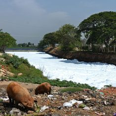 In Bengaluru, water in 42 of 53 lakes unfit for drinking or bathing