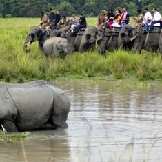 Kaziranga activists jailed: Colleagues claim this is vendetta for their role in BBC film on poaching