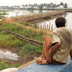 How an unprecedented drought has dealt Kerala's Kole farmers a double blow