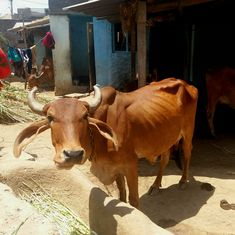 अगर गाय से प्रेम है तो उसे राष्ट्रीय पशु घोषित कर देना चाहिए : जदयू