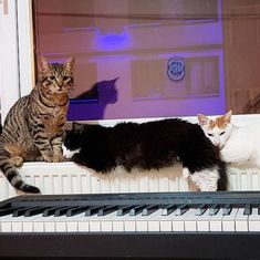 Watch: This Turkish pianist and his cat like to play soothing piano duets