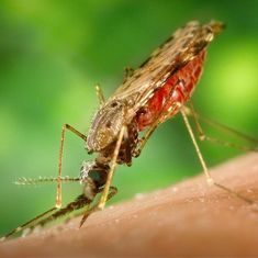 Zika in Ahmedabad: 'This is not a public health crisis,' claims Gujarat health commissioner