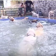 Watch: Going on a holiday? 'Hotel for Dogs' will make sure your pets get one too