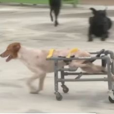 Watch: Disabled dogs and cats in Taiwan get to run once again thanks to these inventive wheelchairs