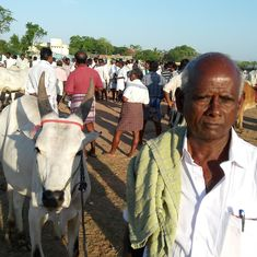 In drought-hit Tamil Nadu, new cattle trade rules threaten to decimate small farmers