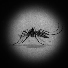Tamil Nadu reports India's fourth case of Zika