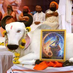 भारतीय गाय दुनिया के सबसे दुर्लभ रंग की भी मां है