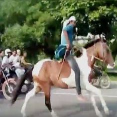 Watch: Forget cars, there were horses 'racing' on the Noida Expressway this Sunday