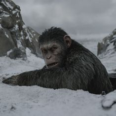 'War for the Planet of the Apes' review: This one will have you rooting against your own species