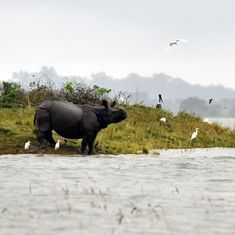 In photos: How animals are coping with the floods at Kaziranga National Park