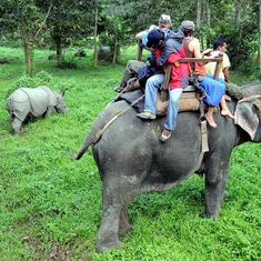 Community effort and intertwined fortunes are behind rising rhino numbers in Nepal