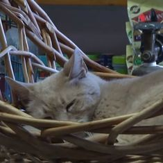 Watch: The life and times of the cat who was Mayor in this American town