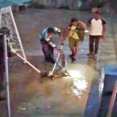 This home in Vadodara, Gujarat had an unusual visitor during the flood: a crocodile