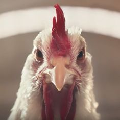 Watch: A 'disturbing' new ad faces criticism for featuring a rapping, dancing chicken
