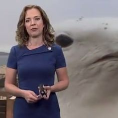 Watch: Live weather report on TV is interrupted by...a giant seagull (twice over)