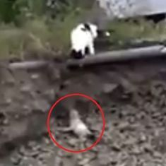 Watch: Cat rescues puppy stuck in a ditch (and demolishes stereotypes)