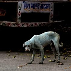 Mumbai factory shut down for dumping dye in the Kasadi river after street dogs in the area turn blue