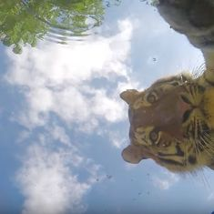 This zoo in Germany hid cameras at the bottom of water buckets. Watch what the animals did