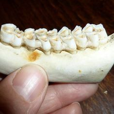 The jaw-dropping things we can learn about our ancestors from their teeth