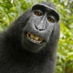 Naruto, the monkey who clicked his selfies, becomes Peta's 2017 Person of the Year