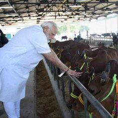 गुजरात में गाय पर्यटन परियोजना शुरू किए जाने सहित आज के अखबारों की प्रमुख सुर्खियां