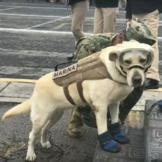 Watch: Frida the rescue dog emerges as a hero in the Mexican earthquake