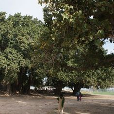 These banyan trees are proof of Pakistan's roots in inter-religious peace and harmony