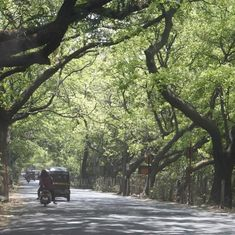 Mumbai: Bombay HC refuses to declare Aarey a forest area, clears tree-cutting for Metro project