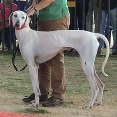 Army to induct first Indian canine breed into its ranks