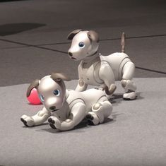 Watch: Sony is launching a new artificial-intelligence-powered dog, complete with puppy eyes