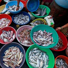 A calendar is protecting India's fish by reminding us when to eat which species