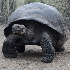 Video: The reason scientists took more than 300 years to name the giant tortoise