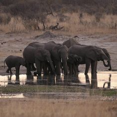 Decision to lift ban on import of elephants killed during hunts not yet finalised, says White House