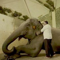 Video: Meet the doctors who make sure the wild animals at Mumbai's zoo are stress free